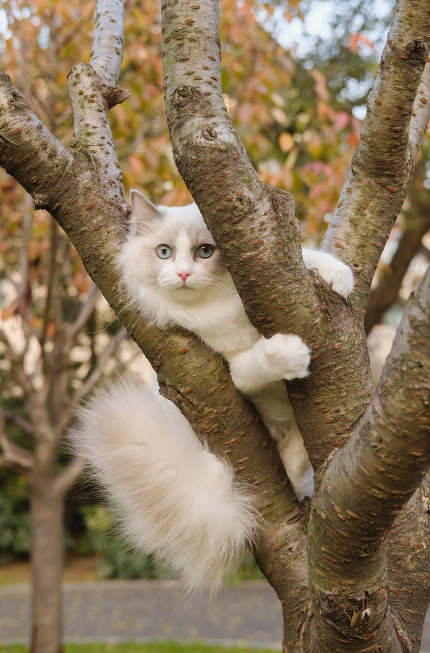 photo of cat climbing on tree