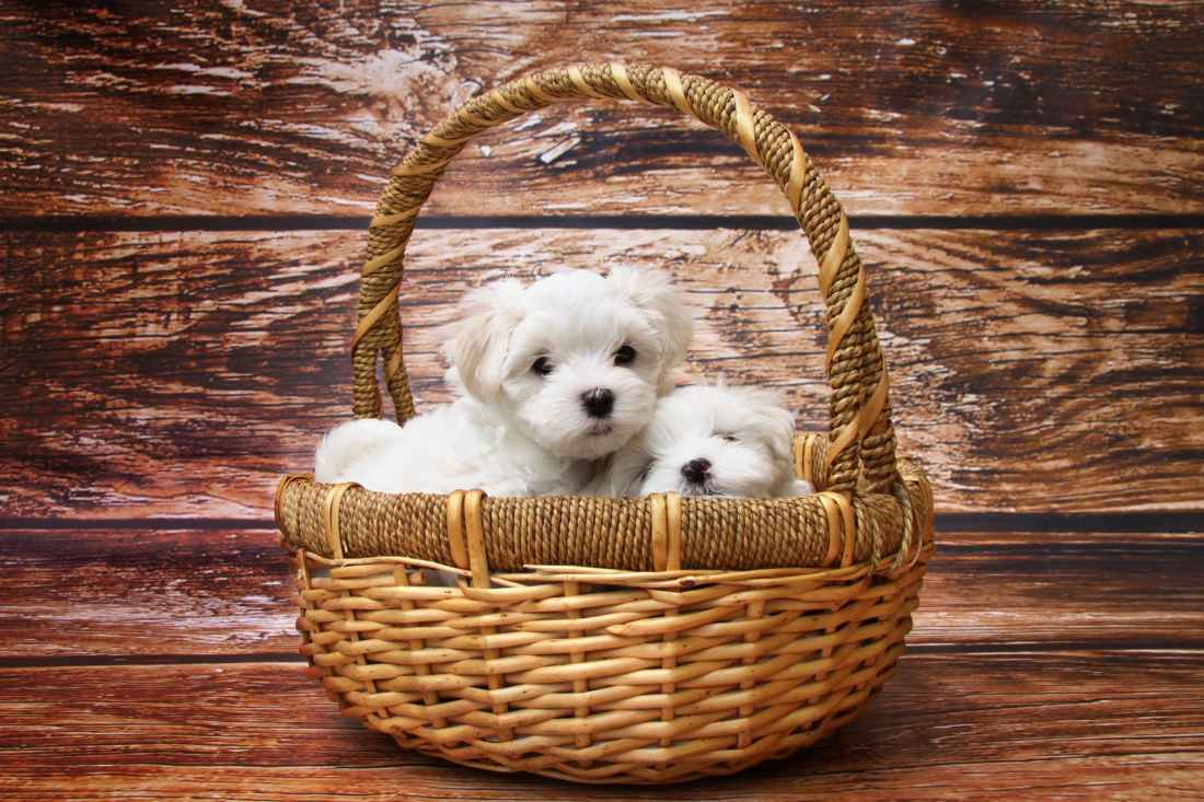 adorable animal baby basket