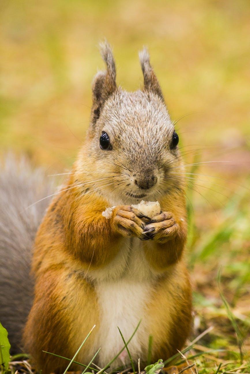 adorable animal blur close up