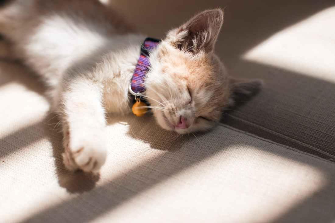 orange cat sleeping on the grey surface