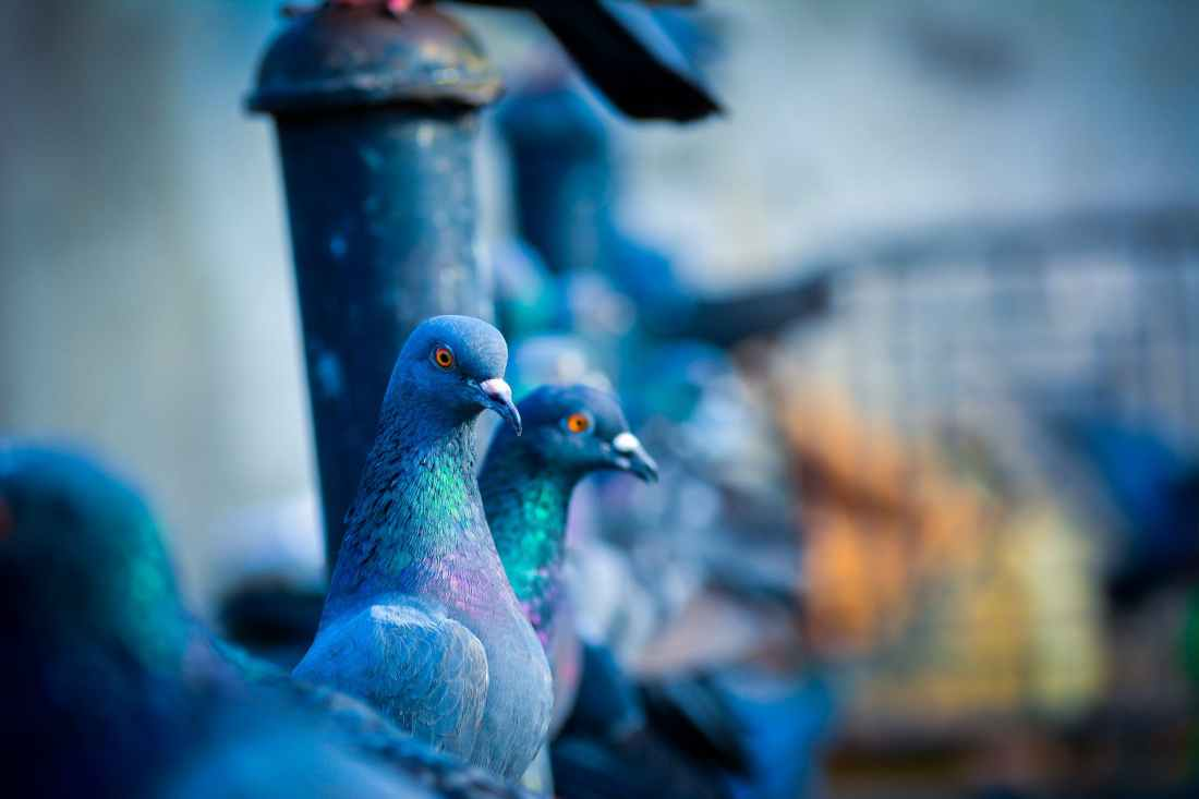 selective focus photo of green pigeon